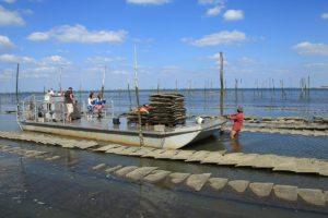 Journée avec un ostréiculteur sur le Bassin d'Arcachon