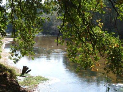 Balade sur les bords de la Leyre au Bassin d'Arcachon