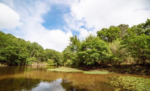 Balade sur les rives de Leyre au Teich