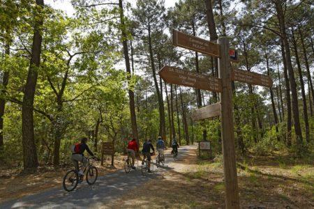 Vélo dans la forêt sur le Bassin d'Arcachon