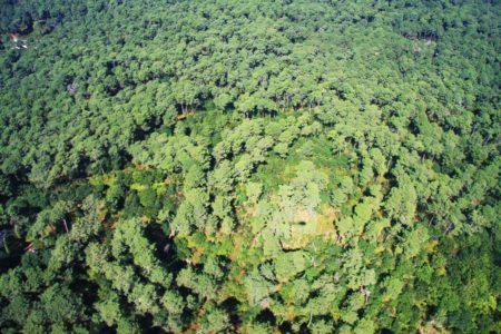 Forêt du Bassin d'Arcachon