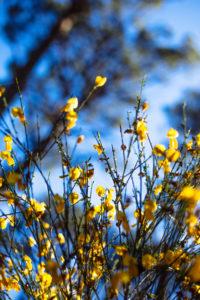 Flore dans une forêt du Bassin d'Arcachon