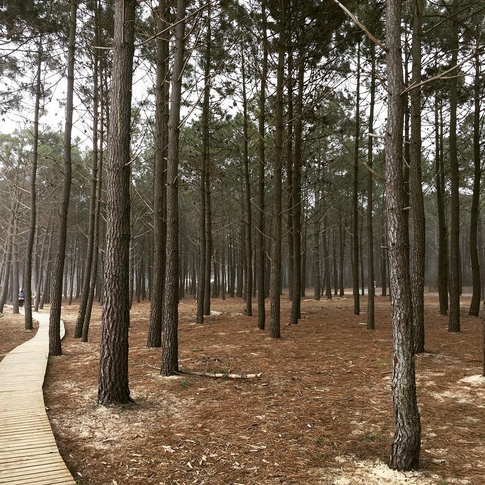 Balade dans une forêt d'exception au Bassin d'Arcachon
