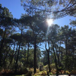 Forêt d'exception au Bassin d'Arcachon