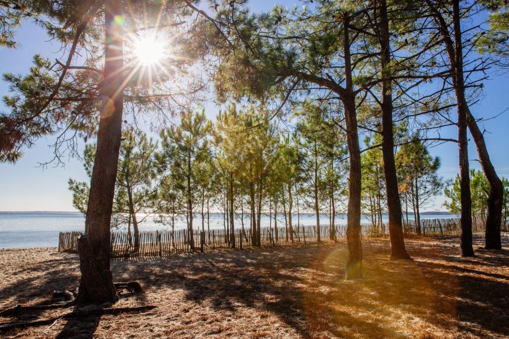 Soleil d'automnes aux Quinconces à Andernos